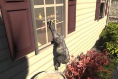 Авторы Goat Simulator будут издавать DLC бесплатно